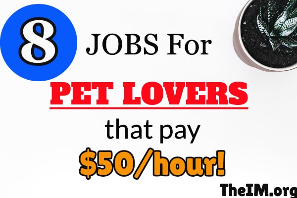 Jobs for Pet Lovers